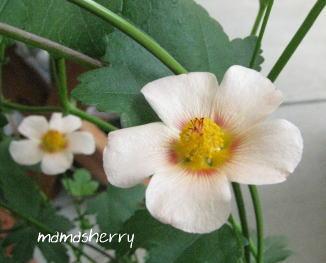 健康レシピの暮らしを彩る花とグリーン:マルバストラム